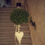 fiori-pietrasanta-7
